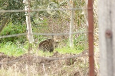 A Feral cat in Eden Park
