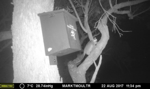 Ringtail Possum and Nestbox